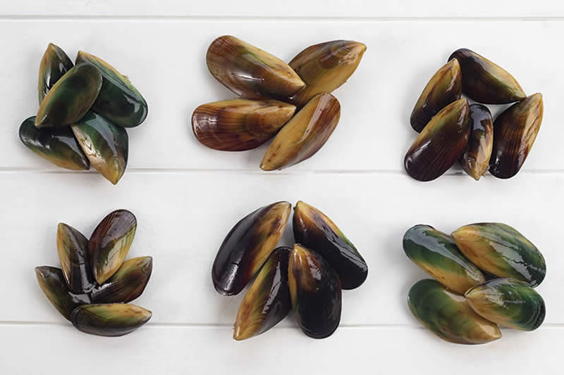 Mussel Family